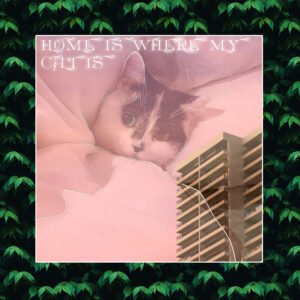HOME IS WHERE MY CAT IS NEW SOLO RELEASE